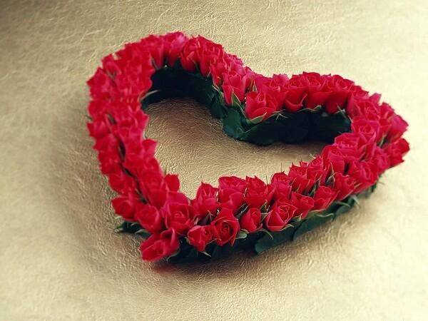 Ý nghĩa của hoa hồng đỏ hình ảnh
