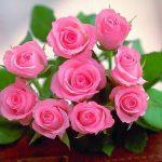 Ý nghĩa số lượng hoa hồng khi tặng