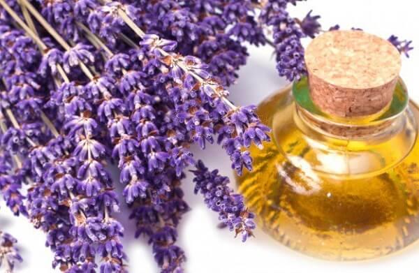 Hướng dẫn cách làm tinh dầu hoa oải hương tại nhà theo từng bước