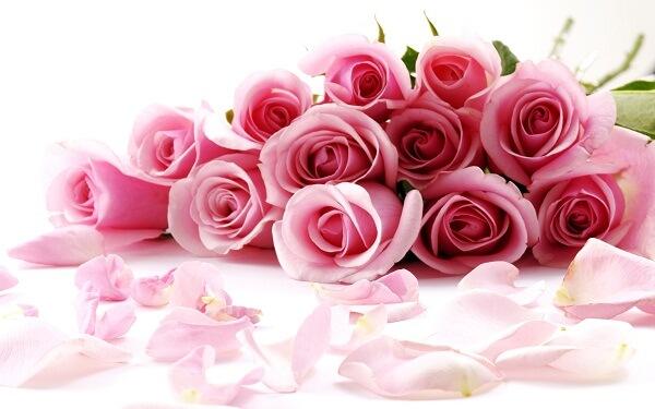 Ý nghĩa của hoa hồng theo số lượng