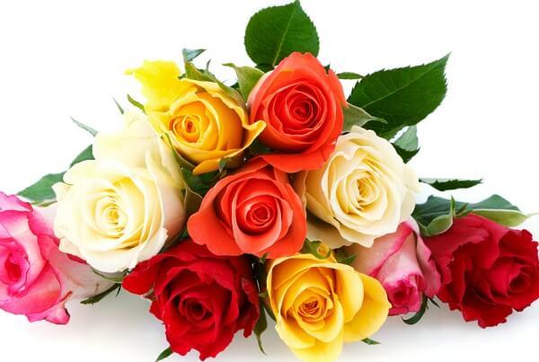 ý nghĩa của hoa hồng trong tình yêu