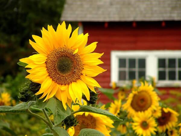Bài trí những loài hoa này ở nơi làm việc sẽ giúp thuận lợi trong công việc
