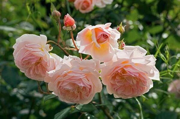 3 loài hoa đắt đỏ và hiếm có trên thế giới hình ảnh 1