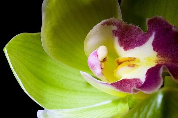 3 loài hoa đắt đỏ và hiếm có trên thế giới hình ảnh 2