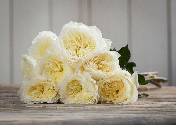Những loại hoa hồng David Austin đẹp nhất hình ảnh 2