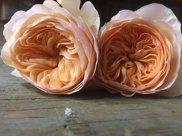Những loại hoa hồng David Austin đẹp nhất