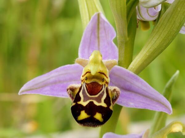 Độc đáo những loài hoa có hình dáng giống như động vật hình ảnh 1