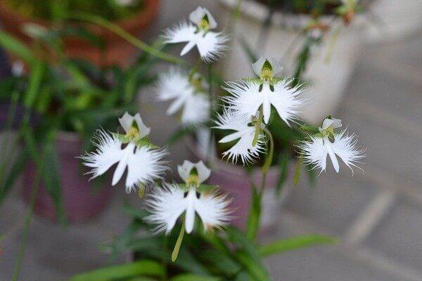 Độc đáo những loài hoa có hình dáng giống như động vật hình ảnh 5