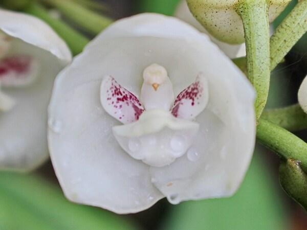 Độc đáo những loài hoa có hình dáng giống như động vật hình ảnh 6