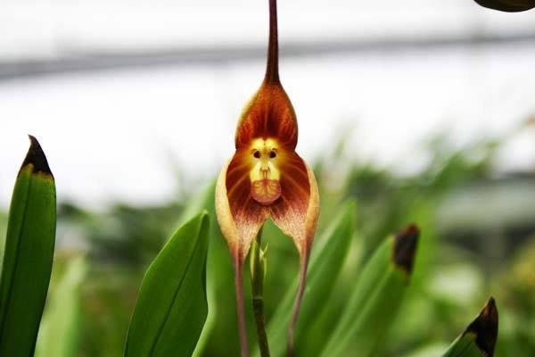Độc đáo những loài hoa có hình dáng giống như động vật