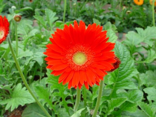 Các loài hoa đẹp dễ trồng cho ngôi nhà thêm sắc hương hình ảnh 3