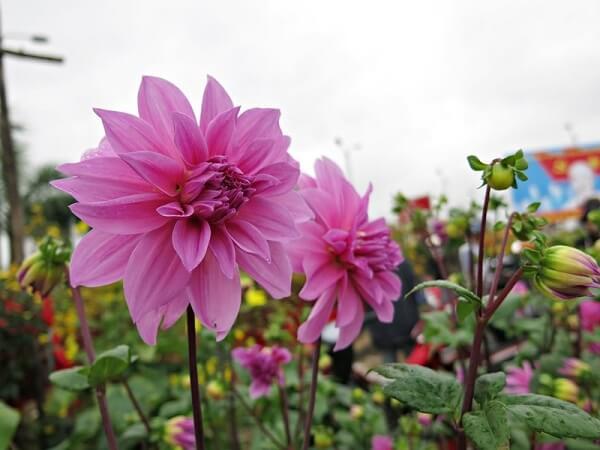 Các loài hoa đẹp dễ trồng cho ngôi nhà thêm sắc hương hình ảnh 4