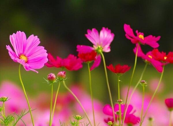 Các loài hoa đẹp dễ trồng cho ngôi nhà thêm sắc hương hình ảnh 6