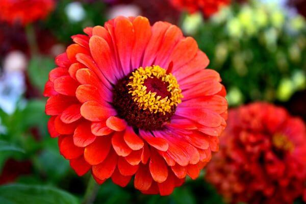 Các loài hoa đẹp dễ trồng cho ngôi nhà thêm sắc hương