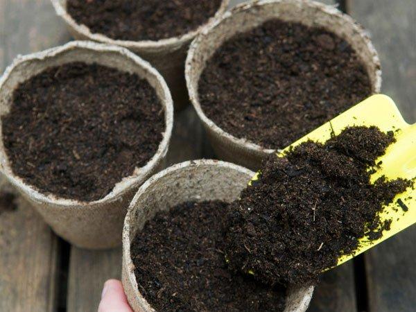 cách trồng hoa cẩm chướng bằng hạt trong chậu hình ảnh 1