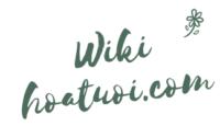 Wiki hoa tươi